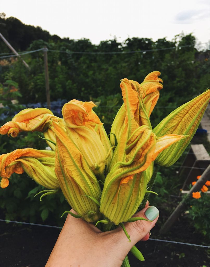 Recipe: fried zucchini flower with ricotta (gevulde gcourgettebloemen met ricotta) - Me Myself & Italy